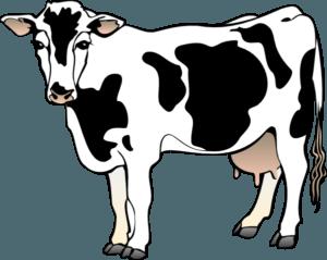 VS Ad- dairy-cow-hi